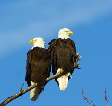 Their Majesties