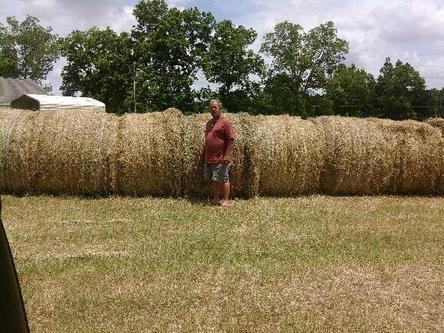 1.5 bales per acre