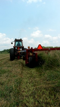 Grass Hay in Ohio