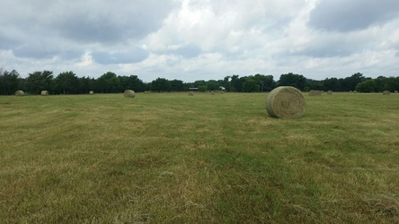 Just after having the hay baled.